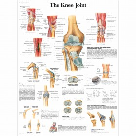 Anatomy Charts- Laminated